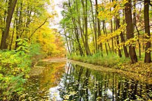 bright green forest with running river bed